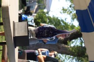 Riverssance Harley Award